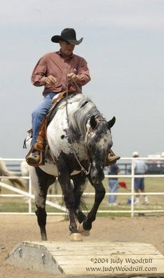 Appaloosa Horses for Sale | Mystic Doc Jay, Appaloosa Stallion in Illinois