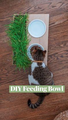 Dog Playground, Cat Feeding, Craft Organization, Diy Stuffed Animals, Diy Projects To Try, Cool Diy, Cat Toys, Diy Gifts, Fur Babies