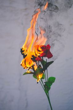 Rose with smoke, could use flowers, just love the atmos