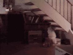 cat-ninja  too cool to climb stairs like normal