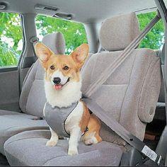 Paw Prime's Seat Belt Harness