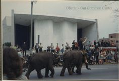 ID#0491 Date: 1968. Mock Convention Parade, North Main Street, elephants with rider. Event took place May 3, 1968. Participants: Carol and Dewey Ganzel.
