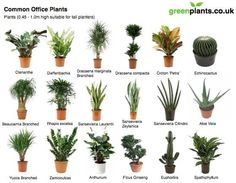 Delicieux Portfolio Of The Week U2013 Alissa Scheller | Pinterest | Office Plants,  Cubicle And Office Spaces