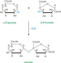 The monomers in a nucleic acid is called nucleotides. They