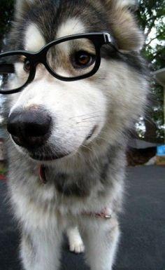 Poochie in glasses! #dogwearingglasses