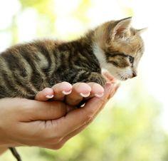 This little kitten supplies large amounts of furry cuteness!
