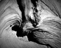 """Résultat de recherche d'images pour """"photographie la matiere bois"""""""