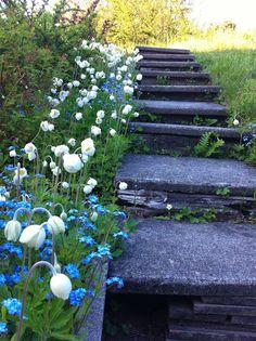 Snøklokker og krokus, før liljer, perleblomst, hvitveis, forsythia og magnolia tar over. Deretter liljekonvallen, brudespirea, syrinene, gullkorg, phlox og forglemmegei. Klematis, rosene, akeleiene, geraniene, peonene, kaprifolene, skjersminen, astilbe, stjerneskjerm og lavendel.