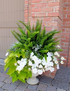 A pretty container with Fern impatience and sweet potato vine.