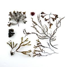 Seaweed arrangement - Jennifer Steen Booher