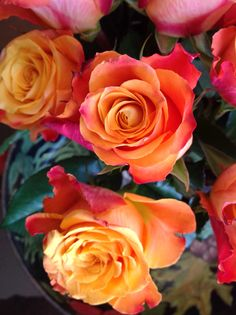 Orange Garden Rose some of our varieties! | flowers 101 | pinterest | garden roses