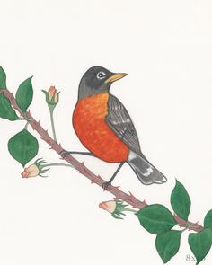 Robin and Roses by GreensofJune on Etsy