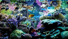 Gloupe's reef is a French chef-d'oeuvre, a modern coral masterpiece Coral Reef Aquarium, Saltwater Aquarium Fish, Saltwater Tank, Marine Aquarium, Freshwater Aquarium, Coral Reefs, Underwater Creatures, Underwater Life, Amazing Aquariums
