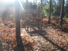 A Good Bench in The Woods