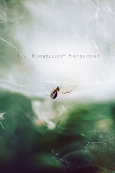 More news from nowhere by *Les Hirondelles* Photography, via Flickr