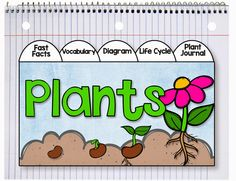 It's Planting Time Get ready to have some FUN while you learn about seeds and planting.