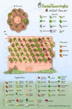 Salad Garden Design Plant