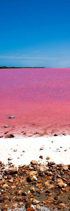 Pink Lake, Australia The lake is not always pink but the distinctive colour of the water changes as a result of green alga Dunaliella salina, halobacterium Halobacteria cutirubrum, and/or high concentration of brine prawn. Once the lake water reaches a salinity level greater than that of sea water, the temperature is high enough and adequate …