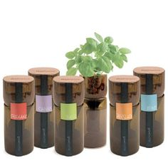 This smart idea takes old wine bottles and transforms them into hydroponic gardens for herbs like basil, mint, oregano, parsley and chives.