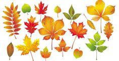Autumn Leaf Collection @freebievectors