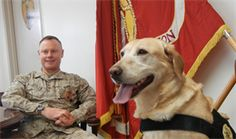 Retired IED dog joins PMO as #USMC public relations specialist, therapist