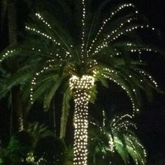 One year I will be where the palm trees stand in all their glory, lighting up the night skies at Christmas!