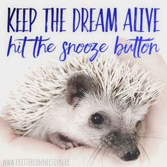 Millermeade Farm's Critter Connection is located in Ohio. Hedgehog For Sale, Hedgehog Care, Hedgehogs, Cage, Connection, Memes, Quotes, Animals, Quotations