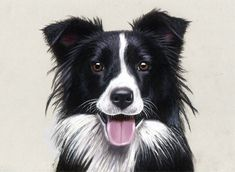 Watch how I drew this dog on YouTube Time Lapse drawing my book with step-by-step drawing tutorials on Amazon: How to Draw Pets with Colored Pencils