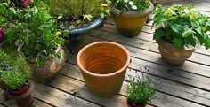 Keep Plants Well Watered If you love plants that require a lot of water, before planting place a damp sponge at the bottom of the pot. This will give the plan extra water for days you may forget to water them.