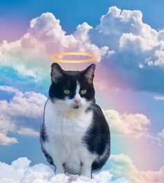 """RIP dat Buffez 🌈 on Twitter: """"Der Mammaz says fanks you for der nice messages about Buffez. She had mouth cancer & could not eat or drink. It broke der Mammaz heart."""