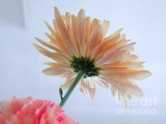 'Underside of Daisy' Fine Art Photography by Terry Weaver - A different view of a delicate daisy. This shot just goes to show that flowers are beautiful from the underside as well. Delicate and pretty, go see.