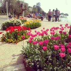 Primavera 2014 - Lungolago di Bardolino @GardaConcierge