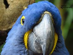 My second favorite shot I took. Fort Worth Zoo, Parrot, Bird, Animals, Parrot Bird, Animales, Animaux, Birds, Animal
