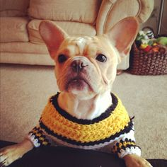 Steelers Frenchie!