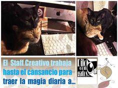 Yoko y Mango.   La mas pequeña y la mayor del Staff de Dilo con Gatos México