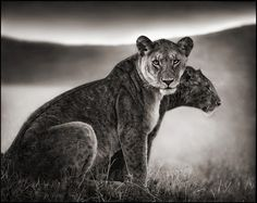 Another beautiful image from Nick Brandt...