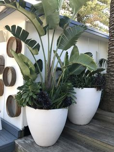 POTSONLINE The Light Weight Pot Specialists But Direct From The Supplier biggest range and stock of over sized large garden pot planters Ph 1300 730 269 Photo features G. Tropical Garden Design, Tropical Landscaping, Tropical Plants, Backyard Landscaping, Tropical Backyard, Large Garden Planters, Patio Plants, Indoor Plants, Large Plant Pots