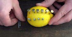 How to Make Fire With a Lemon - zinc nails Survival Tips, Survival Skills, Zinc Nails, Lemon Nails, Homemade Smoker, Bbq Pitmasters, How To Make Fire, Stir Sticks, Fire Starters