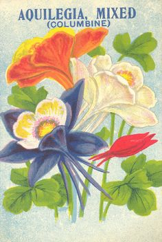 Artwork for Aquilegia mixed (columbine) seed packet