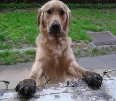 I was required to inspect the mud