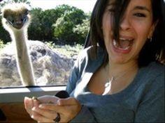 Animal Photobombs