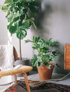 E aproveite para espalhar pela casa plantas como as palmeiras e a Figueira-lira para misturar o visual das estampas com a aparência real das folhagens. O efeito fica bem bacana, a cara do verão.