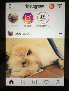 Seguir a Zipy en instagram
