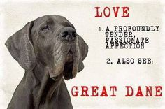 Great Dane – Patient and Friendly Merle Great Danes, Blue Great Danes, Weimaraner, Great Dane Quotes, Funny Animals, Cute Animals, Great Dane Dogs, Handmade Dog Collars, Gentle Giant