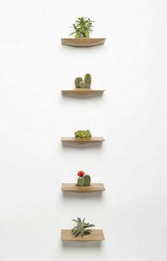 holz regal wandregal für zimmerpflanzen sukkulenten und kakteen
