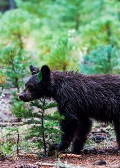 Kings Canyon Camping (Epic Guide) 6 Campgrounds, 5 Hikes, Weather  #camping #nationalparks #nationalpark #kingscanyon  #bears