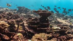 Global warming, El Nino leave 36 per cent of coral reefs on death watch
