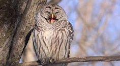 #HappyOwl