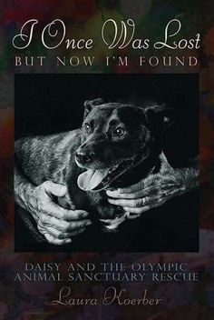Pitbull, Animal Rescue Stories, Animal Books, Puppy Mills, Dog Accessories, Then And Now, Large Dogs, Dog Care, Rescue Dogs