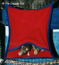 Critter Nation My Rats Pinterest
